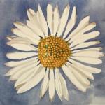 White DaisySOLD